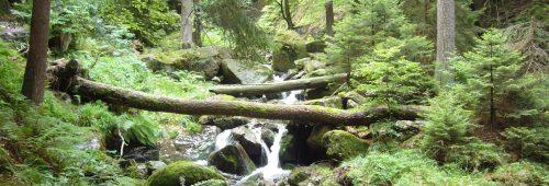 Wald ganz